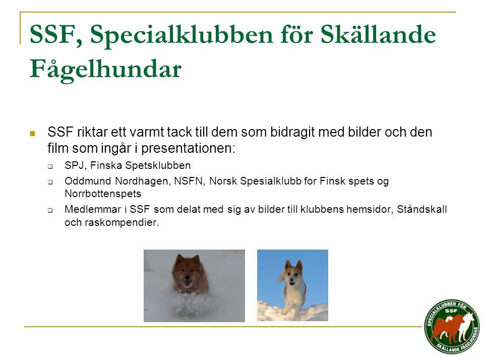 SSF, Specialklubben för Skällande Fågelhundar  SSF riktar ett varmt tack till dem som bidragit med bilder och den film som ingår i presentationen: 