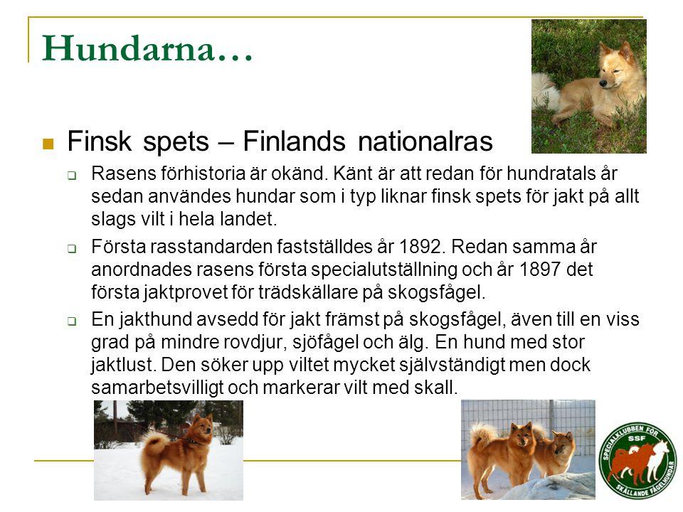 Hundarna…  Finsk spets – Finlands nationalras  Rasens förhistoria är okänd. Känt är att redan för hundratals år sedan användes hundar som i typ likn