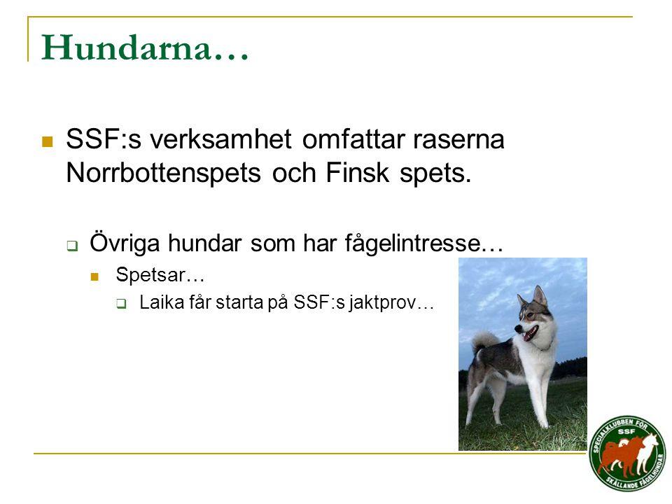 Hundarna…  SSF:s verksamhet omfattar raserna Norrbottenspets och Finsk spets.  Övriga hundar som har fågelintresse…  Spetsar…  Laika får starta på