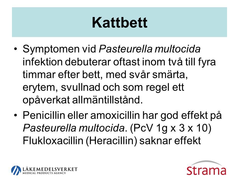 Kattbett •Symptomen vid Pasteurella multocida infektion debuterar oftast inom två till fyra timmar efter bett, med svår smärta, erytem, svullnad och som regel ett opåverkat allmäntillstånd.