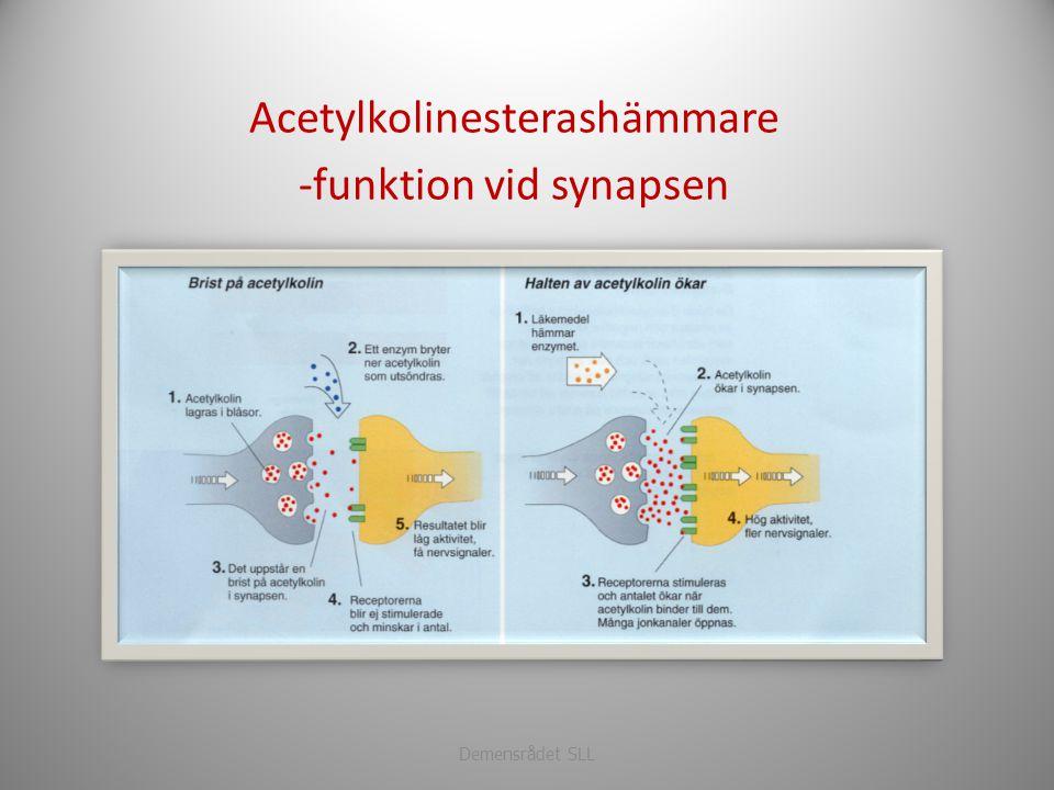 Acetylkolinesterashämmare -funktion vid synapsen Demensrådet SLL