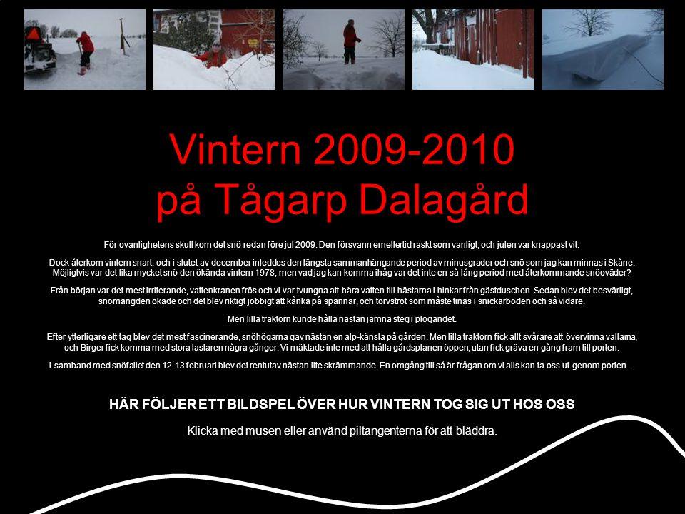 Vintern 2009-2010 på Tågarp Dalagård För ovanlighetens skull kom det snö redan före jul 2009.