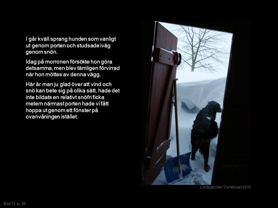Bild 11 av 30 I går kväll sprang hunden som vanligt ut genom porten och studsade iväg genom snön.
