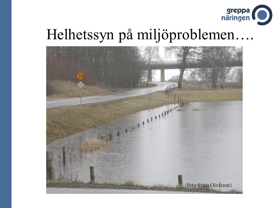 Helhetssyn på miljöproblemen…. (foto:Stina Olofsson)