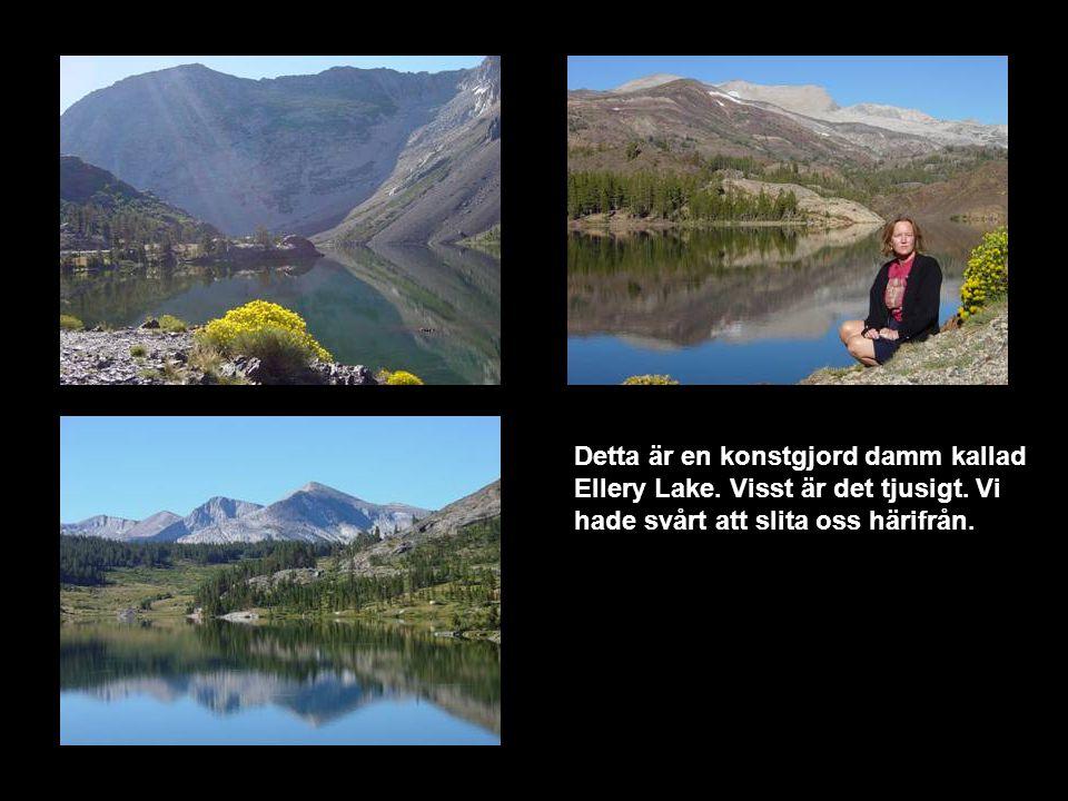 Detta är en konstgjord damm kallad Ellery Lake. Visst är det tjusigt.