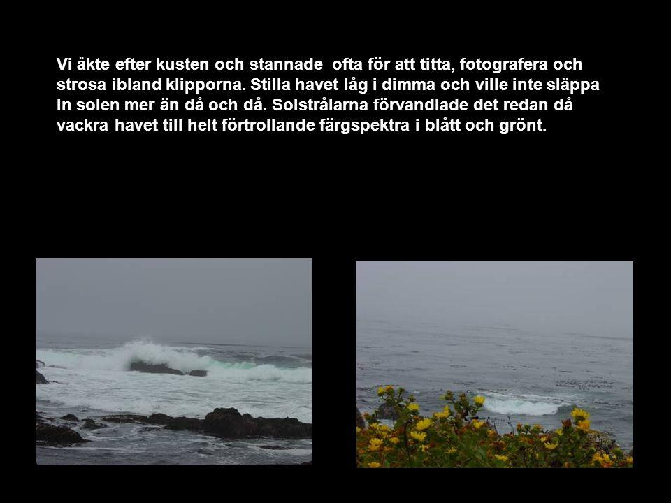 Vi åkte efter kusten och stannade ofta för att titta, fotografera och strosa ibland klipporna.