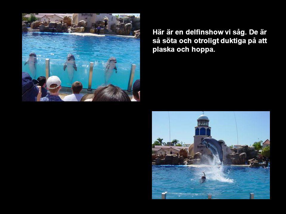 Här är en delfinshow vi såg. De är så söta och otroligt duktiga på att plaska och hoppa.
