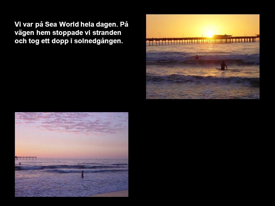 Vi var på Sea World hela dagen. På vägen hem stoppade vi stranden och tog ett dopp i solnedgången.