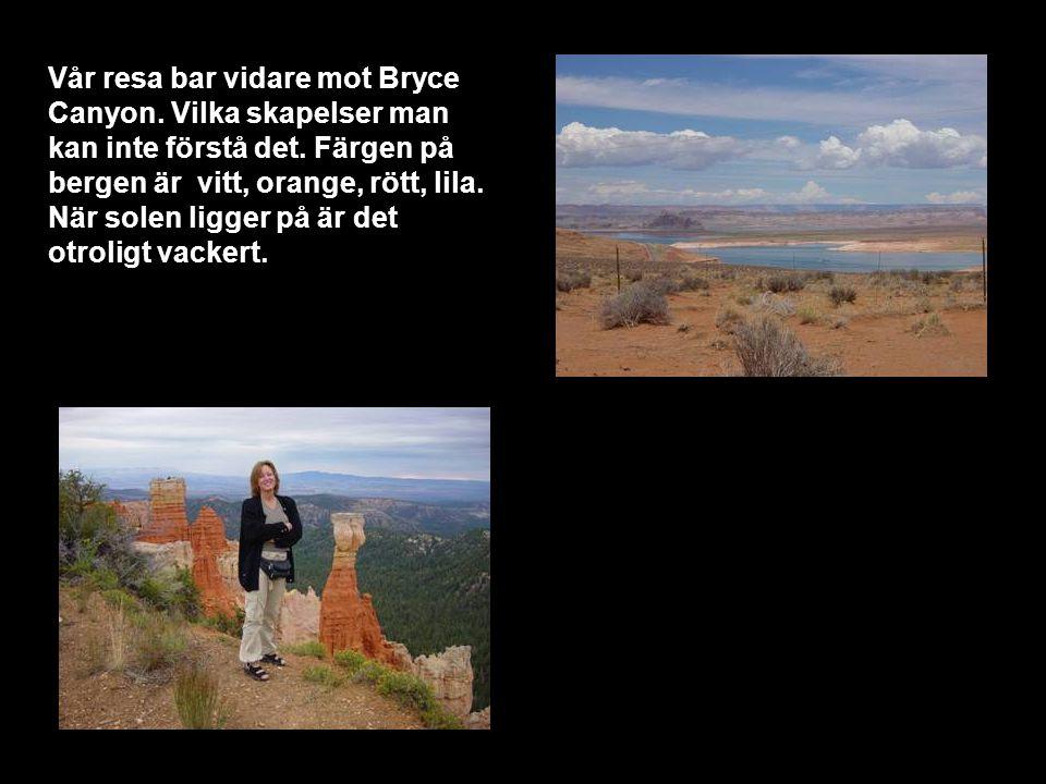 Vår resa bar vidare mot Bryce Canyon. Vilka skapelser man kan inte förstå det.