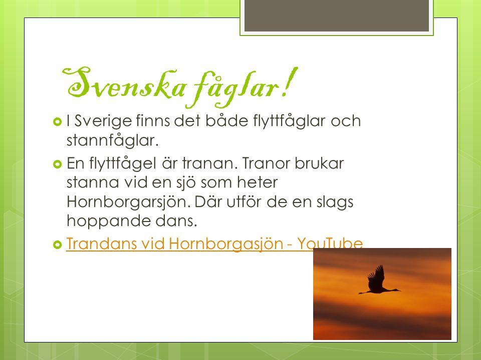 Svenska fåglar. I Sverige finns det både flyttfåglar och stannfåglar.