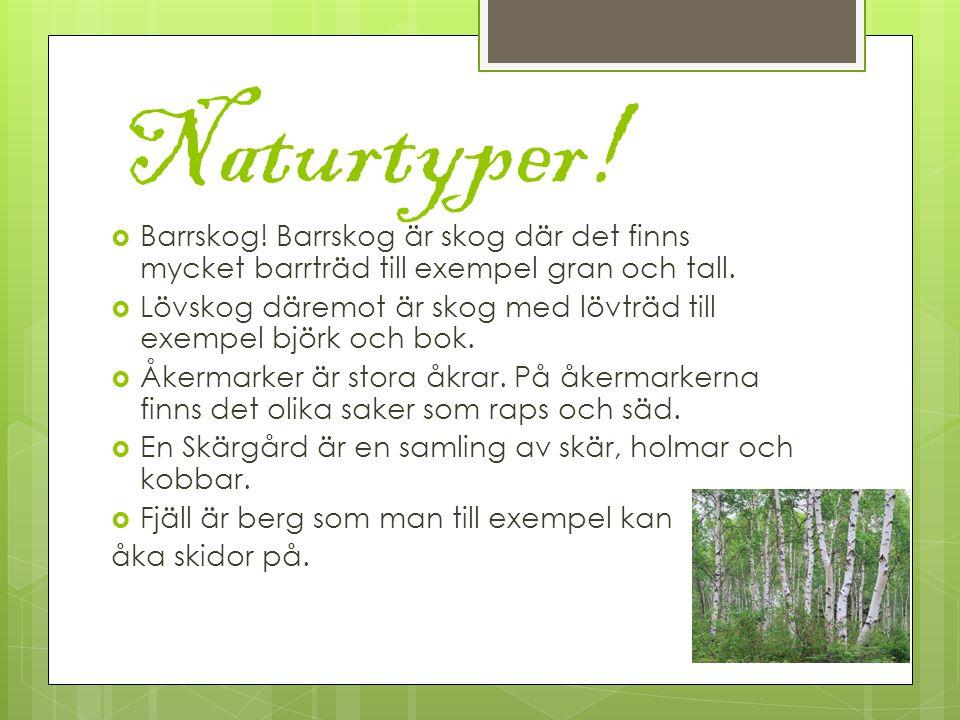 Naturtyper. Barrskog. Barrskog är skog där det finns mycket barrträd till exempel gran och tall.