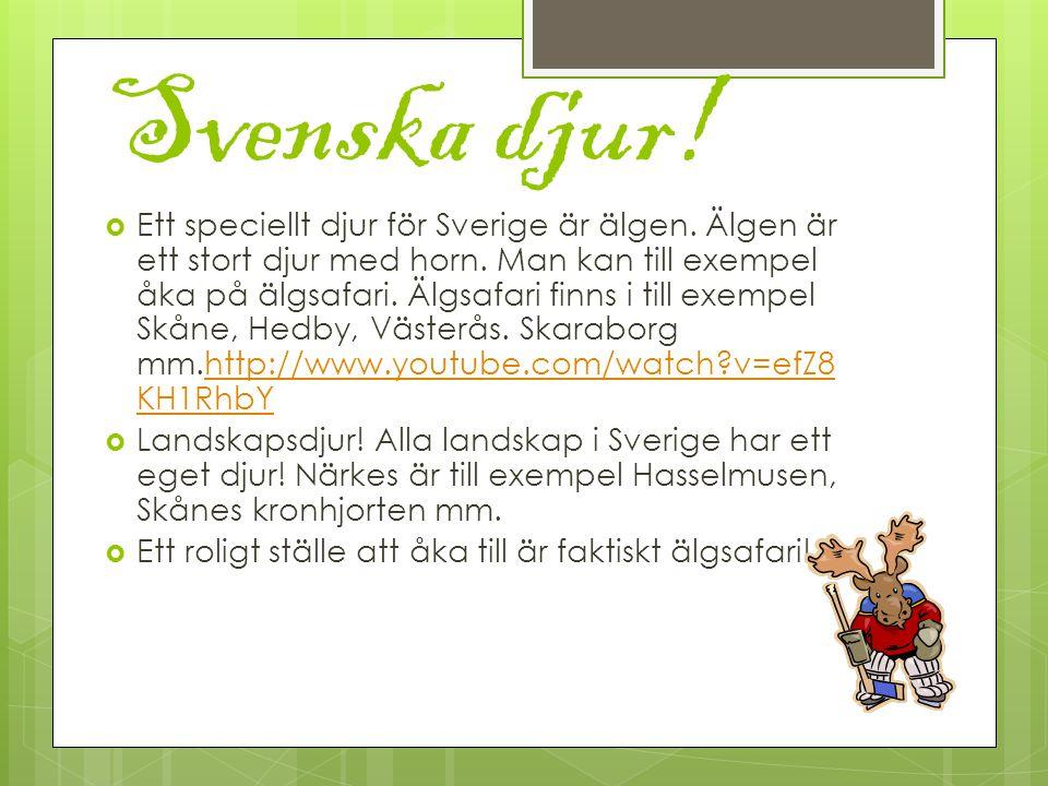 Svenska djur. Ett speciellt djur för Sverige är älgen.