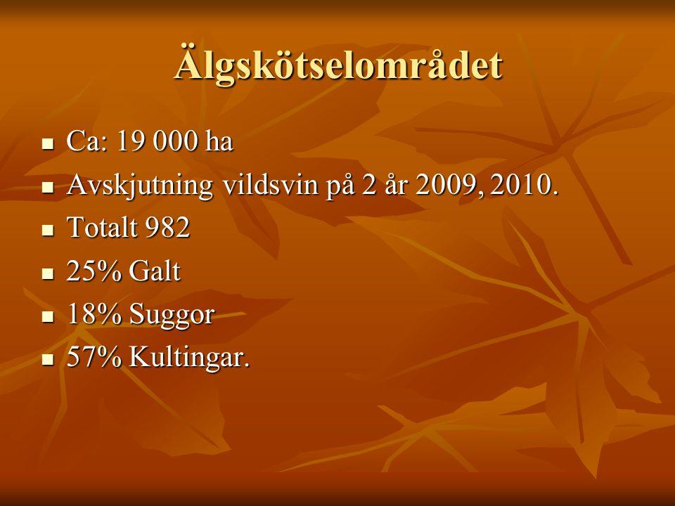 Älgskötselområdet  Ca: 19 000 ha  Avskjutning vildsvin på 2 år 2009, 2010.  Totalt 982  25% Galt  18% Suggor  57% Kultingar.
