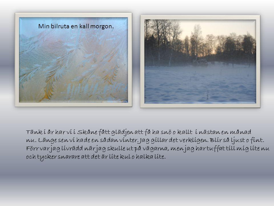Tänk i år har vi i Skåne fått glädjen att få ha snö o kallt i nästan en månad nu.
