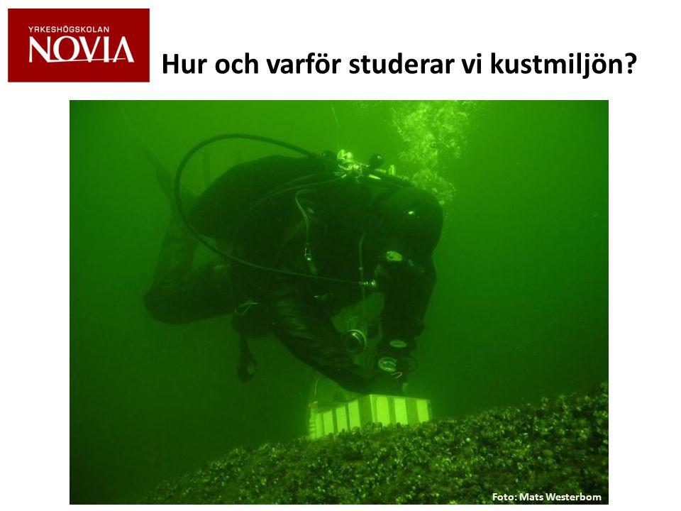 För att förstå hur vår kustmiljö fungerar lär vi oss: • Hur Östersjöns ekosystem fungerar • Vilka nyckelarter som lever i Östersjön • Vilka krav de har på sin livsmiljö • Hur vår kustmiljö mår och varför den mår den som den mår • Vad vi kan vi göra för att förbättra situationen Foto: Mats Westerbom