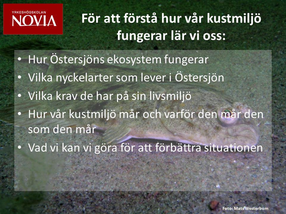 För att lära oss detta håller vi föreläsningar och jobbar i fält Foto: Eva Sandberg-Kilpi