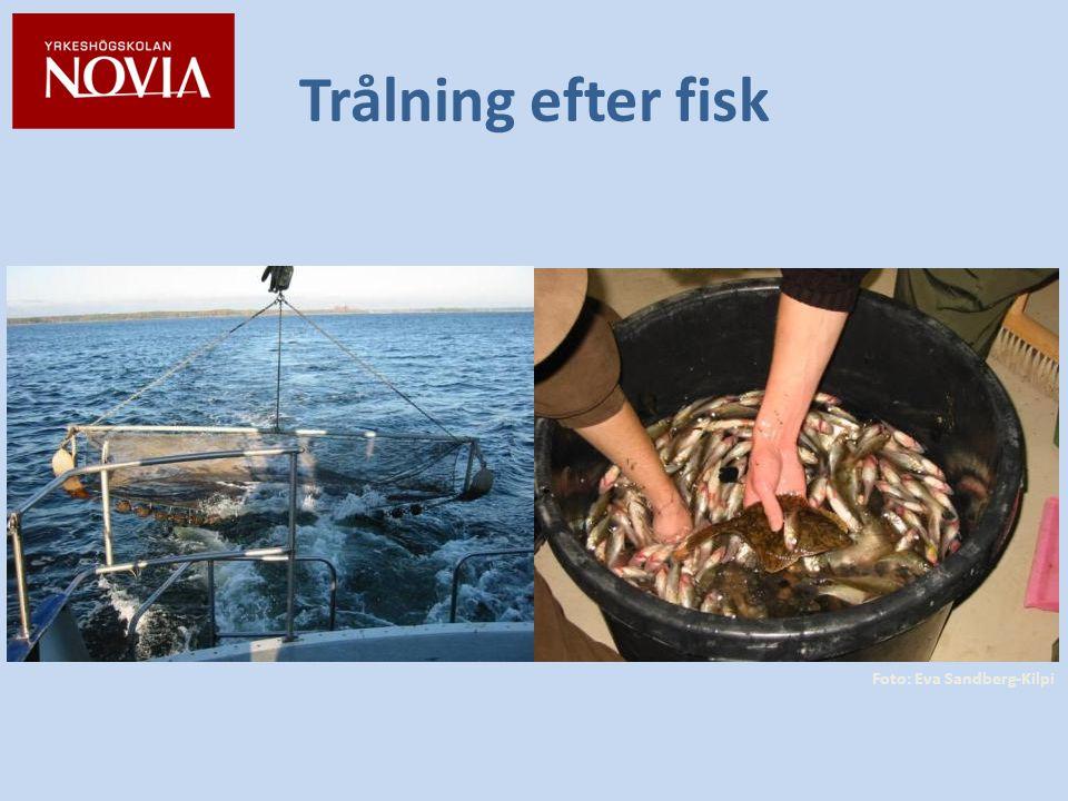Trålning efter fisk Foto: Eva Sandberg-Kilpi