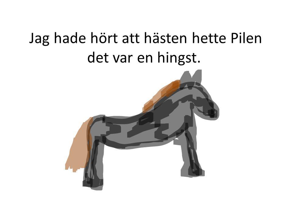 Jag hade hört att hästen hette Pilen det var en hingst.