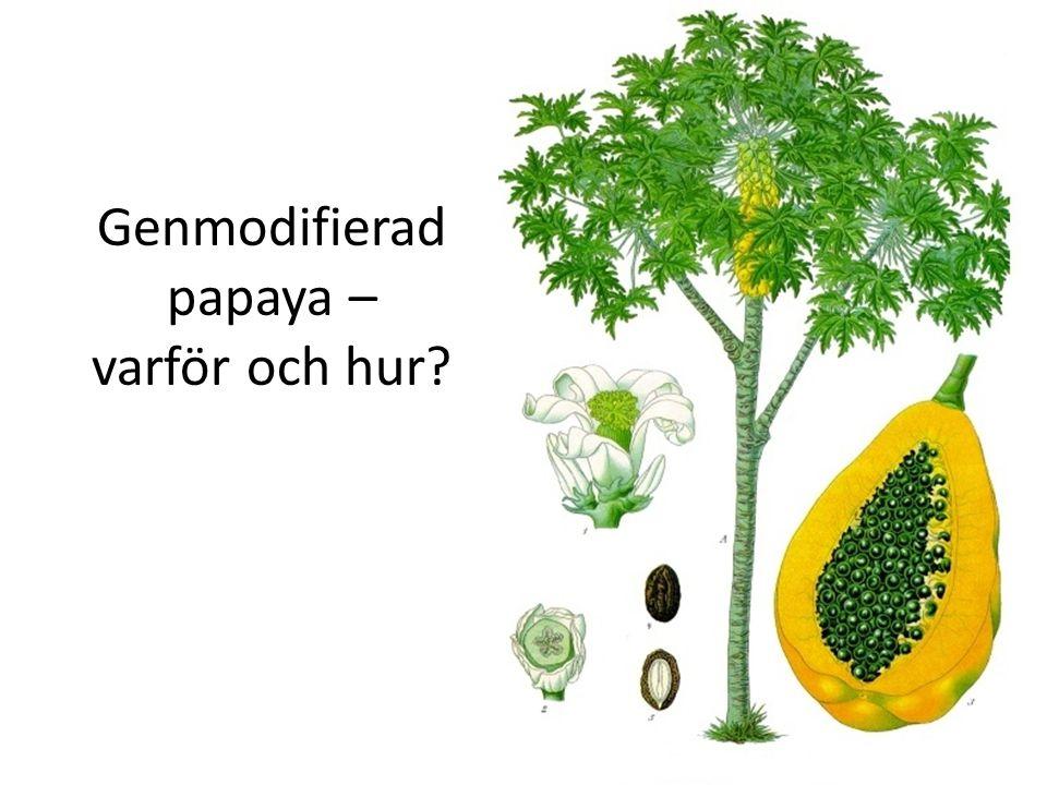 Virus angriper papaya Papya ringspot virus (PRSV) ger symptom på (a) papayaträdets blad och (b) cirkelrunda skador på papayafrukterna.