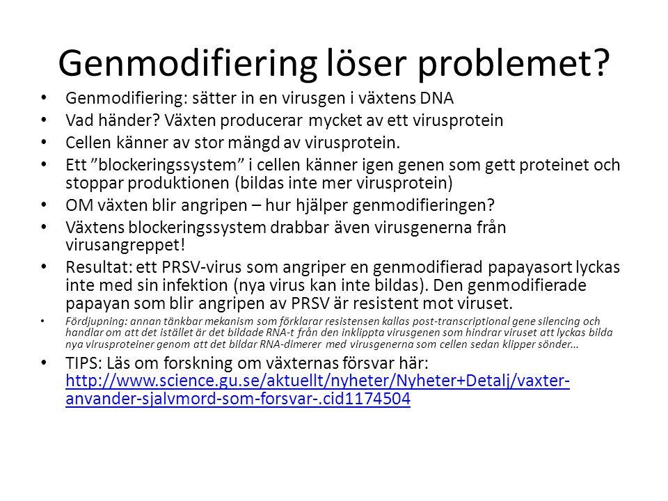 Genmodifiering löser problemet.• Genmodifiering: sätter in en virusgen i växtens DNA • Vad händer.