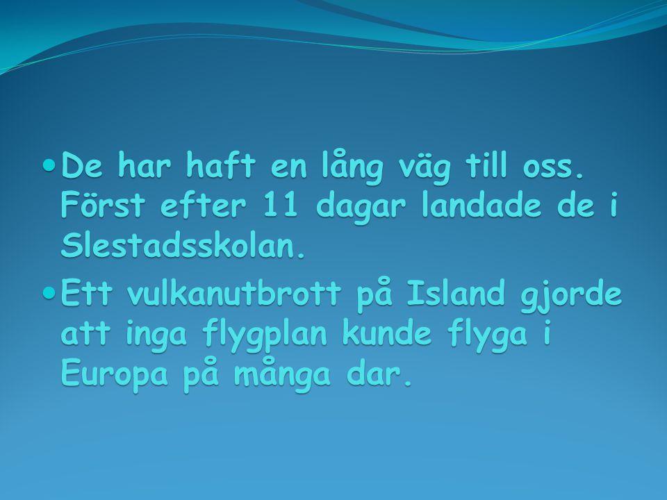  De har haft en lång väg till oss. Först efter 11 dagar landade de i Slestadsskolan.  Ett vulkanutbrott på Island gjorde att inga flygplan kunde fly