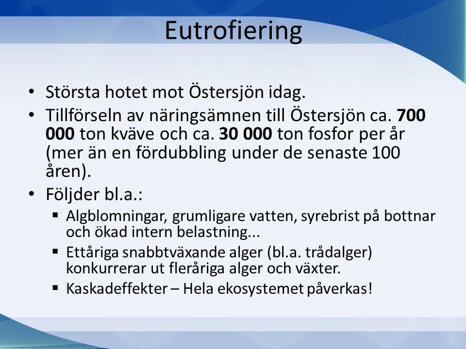 Eutrofiering • Största hotet mot Östersjön idag. • Tillförseln av näringsämnen till Östersjön ca. 700 000 ton kväve och ca. 30 000 ton fosfor per år (