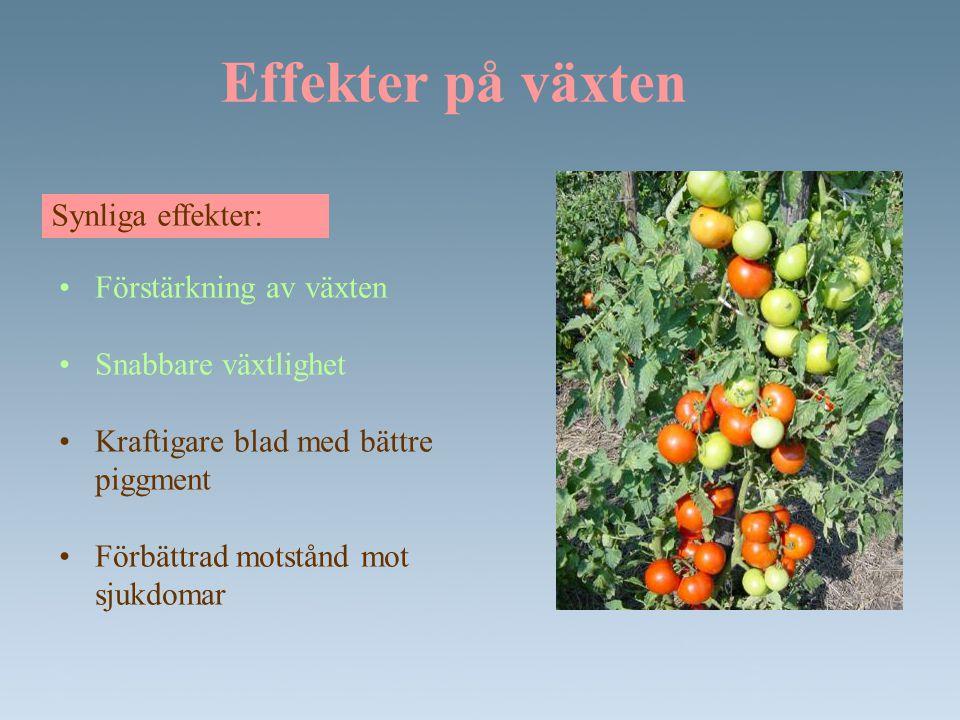 Effekter på växten Synliga effekter: •Förstärkning av växten •Snabbare växtlighet •Kraftigare blad med bättre piggment •Förbättrad motstånd mot sjukdo