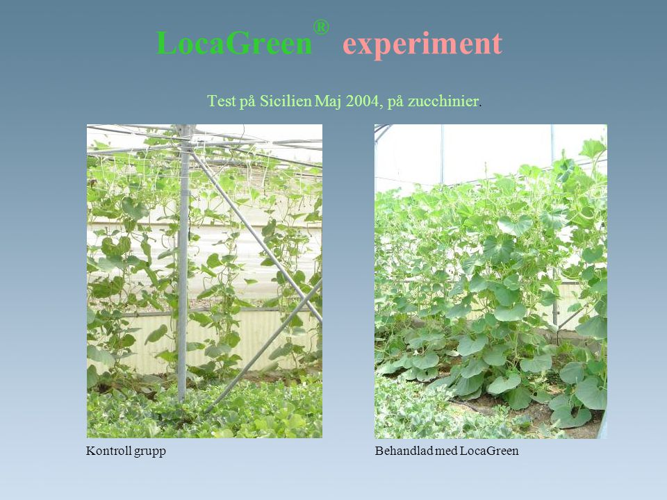 LocaGreen ® experiment Test på Sicilien Maj 2004, på zucchinier. Behandlad med LocaGreenKontroll grupp