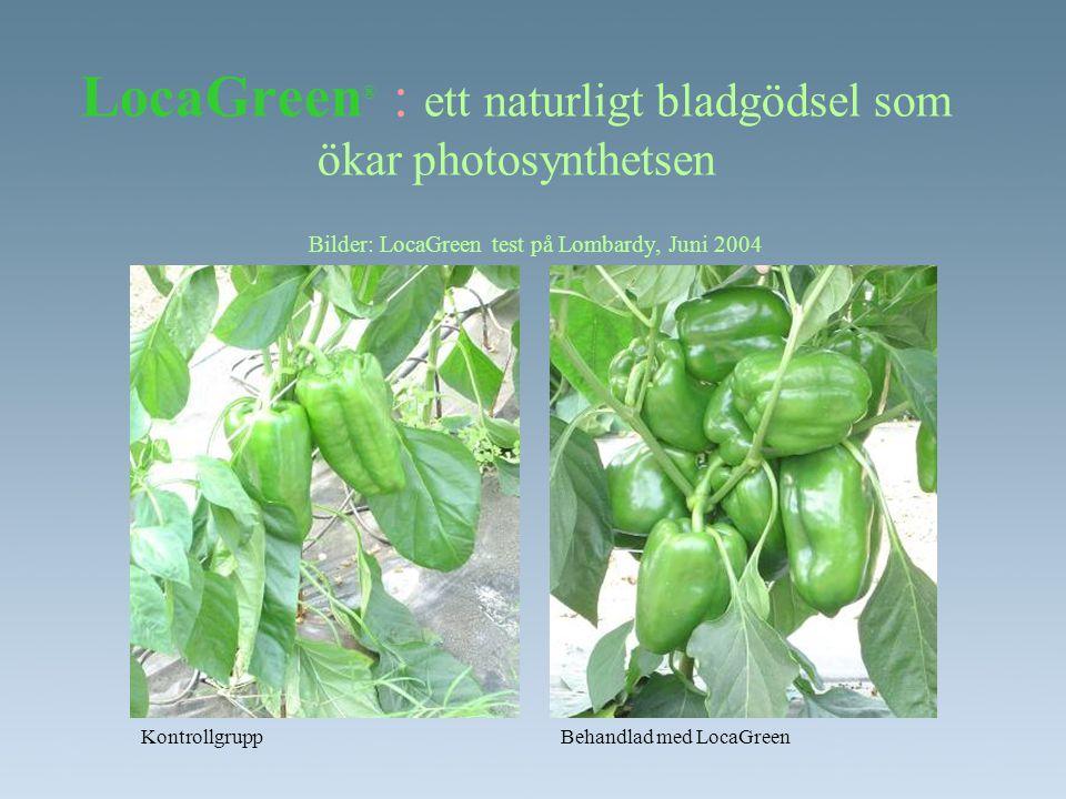 Bilder: LocaGreen test på Lombardy, Juni 2004 LocaGreen ® : ett naturligt bladgödsel som ökar photosynthetsen KontrollgruppBehandlad med LocaGreen