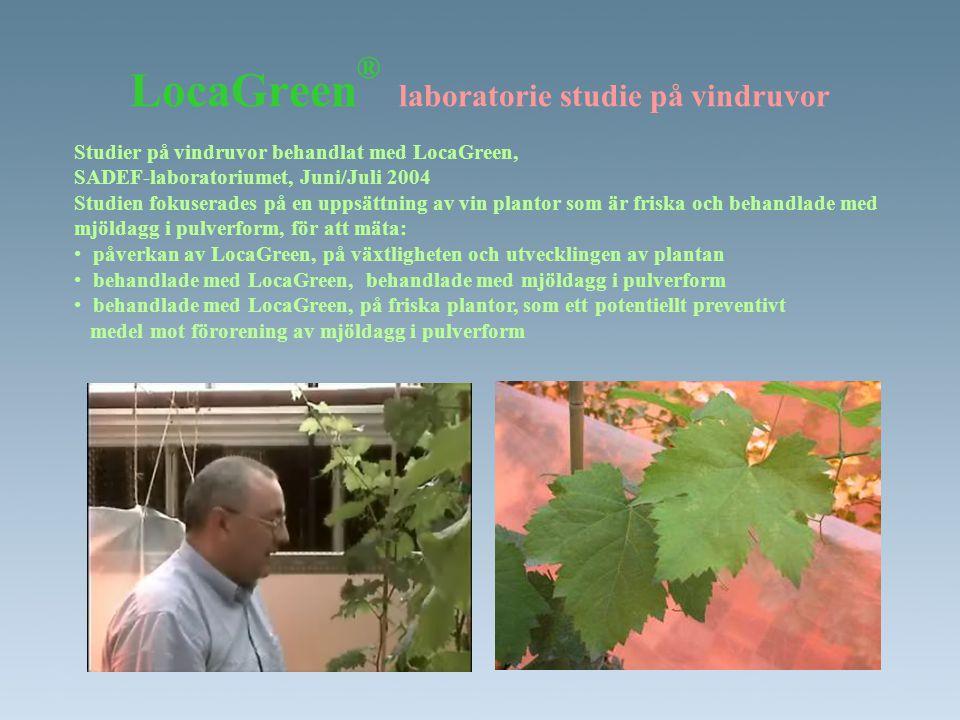 LocaGreen ® laboratorie studie på vindruvor Studier på vindruvor behandlat med LocaGreen, SADEF-laboratoriumet, Juni/Juli 2004 Studien fokuserades på