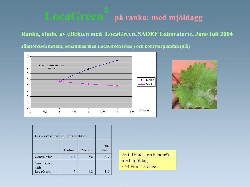 LocaGreen ® på ranka: med mjöldagg Ranka, studie av effekten med LocaGreen, SADEF Laboratorie, Juni/Juli 2004 Jämförelsen mellan, behandlad med LocaGr