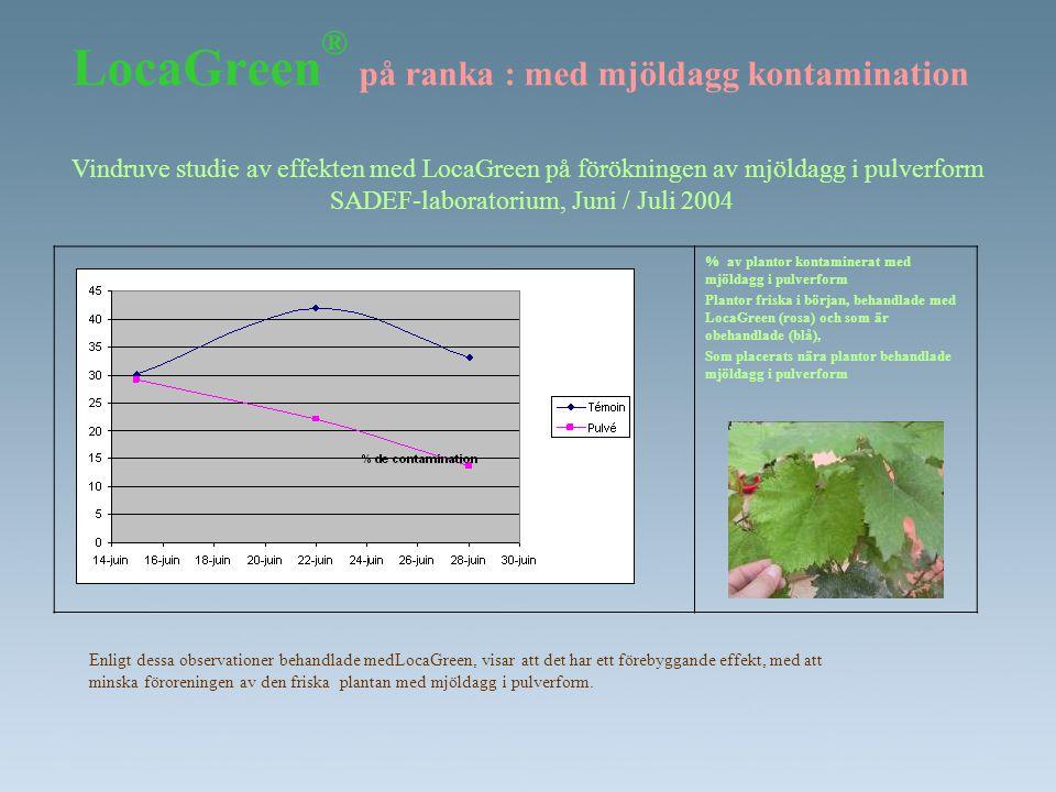 LocaGreen ® på ranka : med mjöldagg kontamination % av plantor kontaminerat med mjöldagg i pulverform Plantor friska i början, behandlade med LocaGree