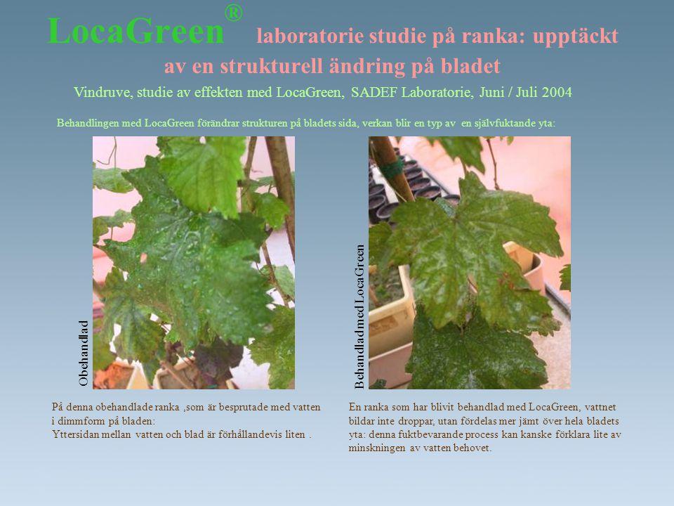 LocaGreen ® laboratorie studie på ranka: upptäckt av en strukturell ändring på bladet Vindruve, studie av effekten med LocaGreen, SADEF Laboratorie, J