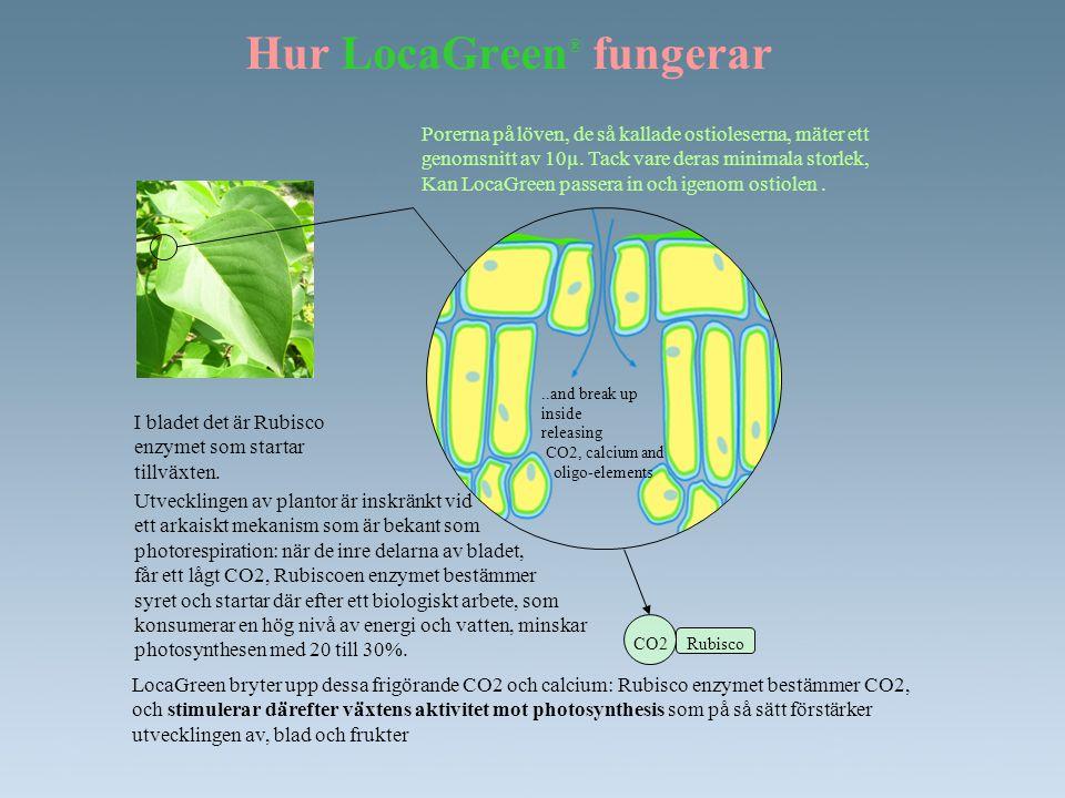 Hur LocaGreen ® fungerar Porerna på löven, de så kallade ostioleserna, mäter ett genomsnitt av 10µ. Tack vare deras minimala storlek, Kan LocaGreen pa
