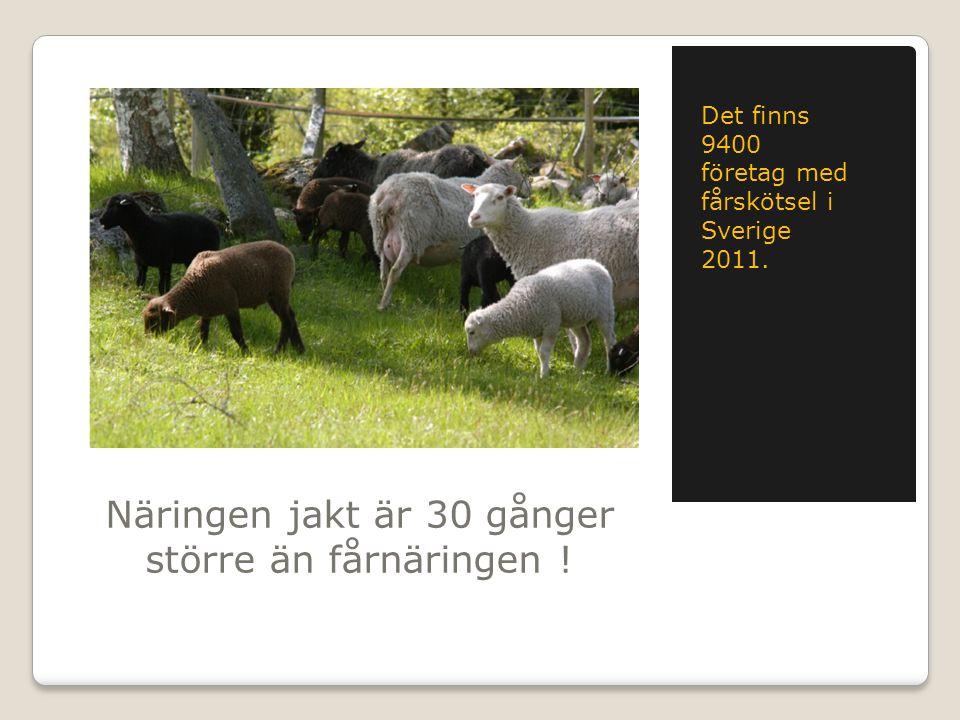 Näringen jakt är 30 gånger större än fårnäringen ! Det finns 9400 företag med fårskötsel i Sverige 2011.