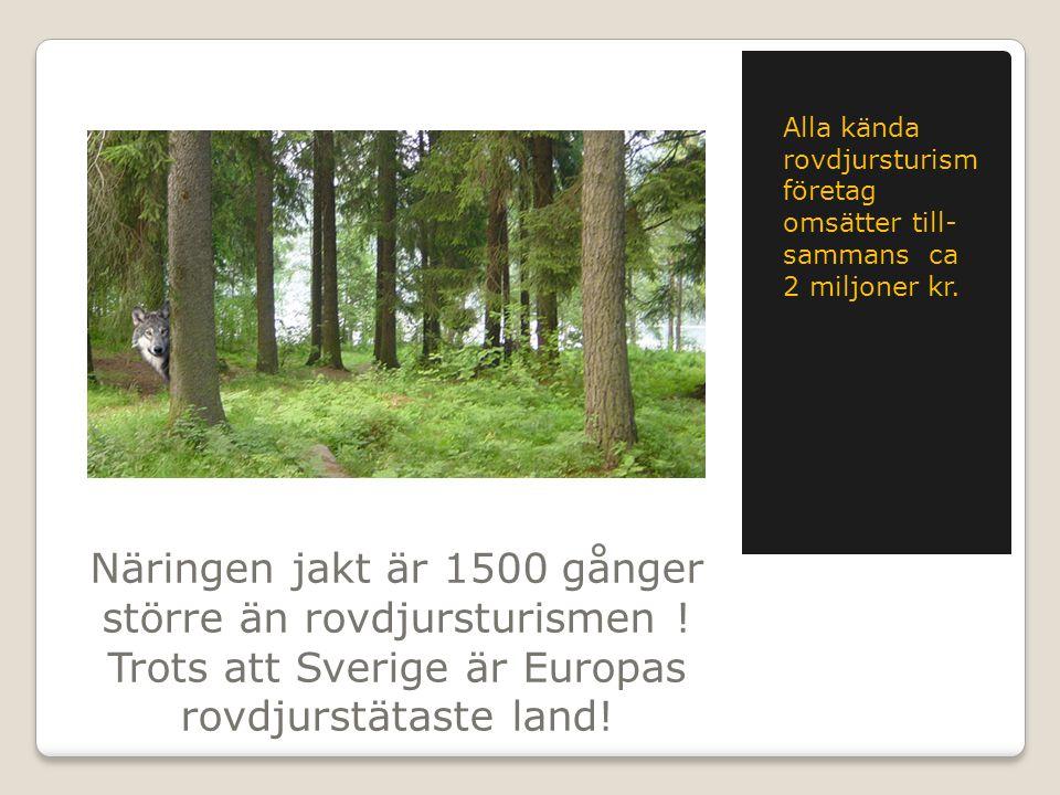 Näringen jakt är 1500 gånger större än rovdjursturismen ! Trots att Sverige är Europas rovdjurstätaste land! Alla kända rovdjursturism företag omsätte