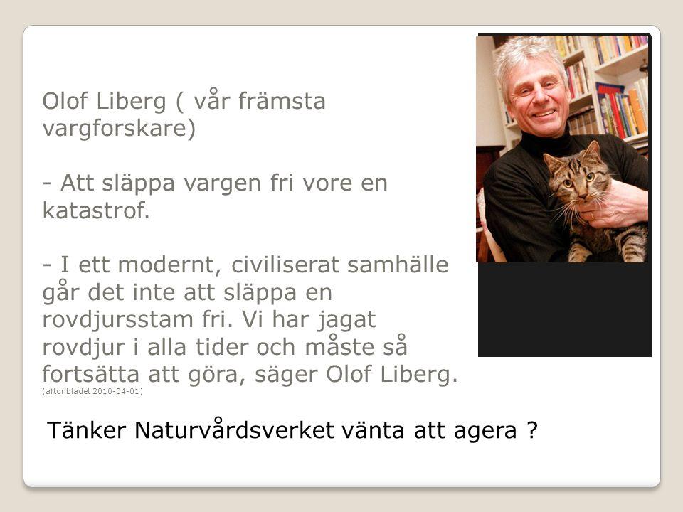 Olof Liberg ( vår främsta vargforskare) - Att släppa vargen fri vore en katastrof. - I ett modernt, civiliserat samhälle går det inte att släppa en ro