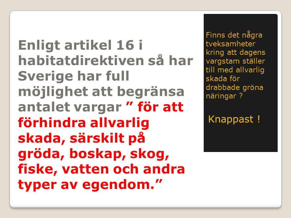 """Enligt artikel 16 i habitatdirektiven så har Sverige har full möjlighet att begränsa antalet vargar """" för att förhindra allvarlig skada, särskilt på g"""