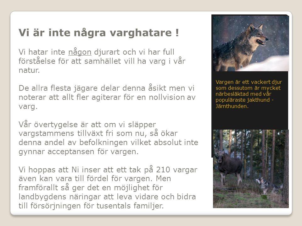 Vi är inte några varghatare ! Vi hatar inte någon djurart och vi har full förståelse för att samhället vill ha varg i vår natur. De allra flesta jägar