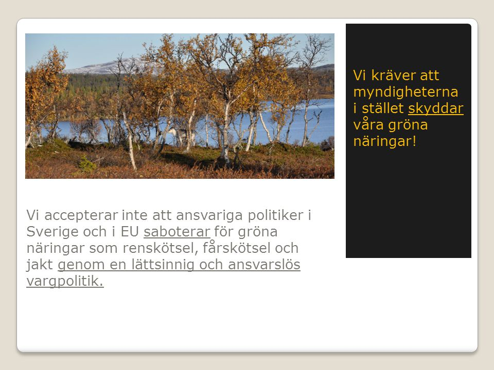 Vi accepterar inte att ansvariga politiker i Sverige och i EU saboterar för gröna näringar som renskötsel, fårskötsel och jakt genom en lättsinnig och ansvarslös vargpolitik.