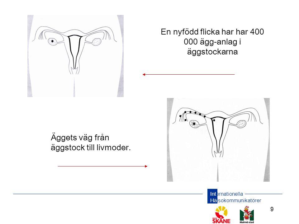Internationella Hälsokommunikatörer 9 En nyfödd flicka har har 400 000 ägg-anlag i äggstockarna Äggets väg från äggstock till livmoder.