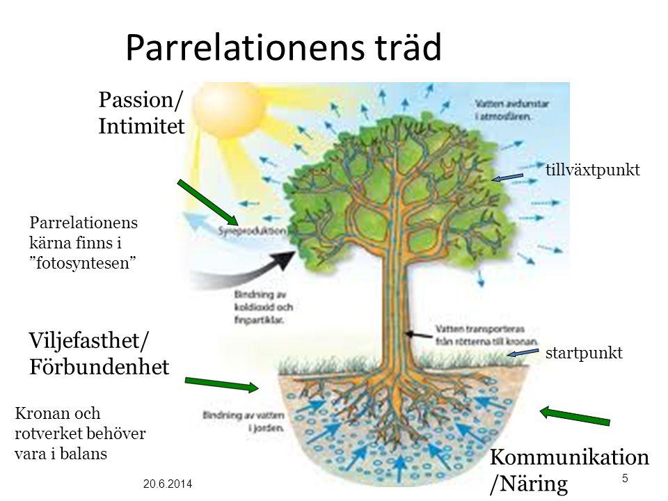 """Parrelationens träd Parrelationens kärna finns i """"fotosyntesen"""" Kronan och rotverket behöver vara i balans Viljefasthet/ Förbundenhet Passion/ Intimit"""