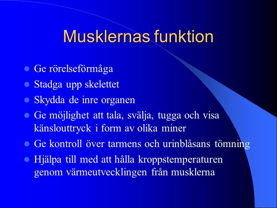 Muskelfunktion efter stroke  Muskelsvaghet  Minskad uthållighet  Bristande koordination  Även icke-drabbad sida påverkas – resultat av allmänt sänkt aktivitetsnivå  Muskelsvaghet mer uttalad distalt än proximalt  Påverkar förflyttningsförmågan