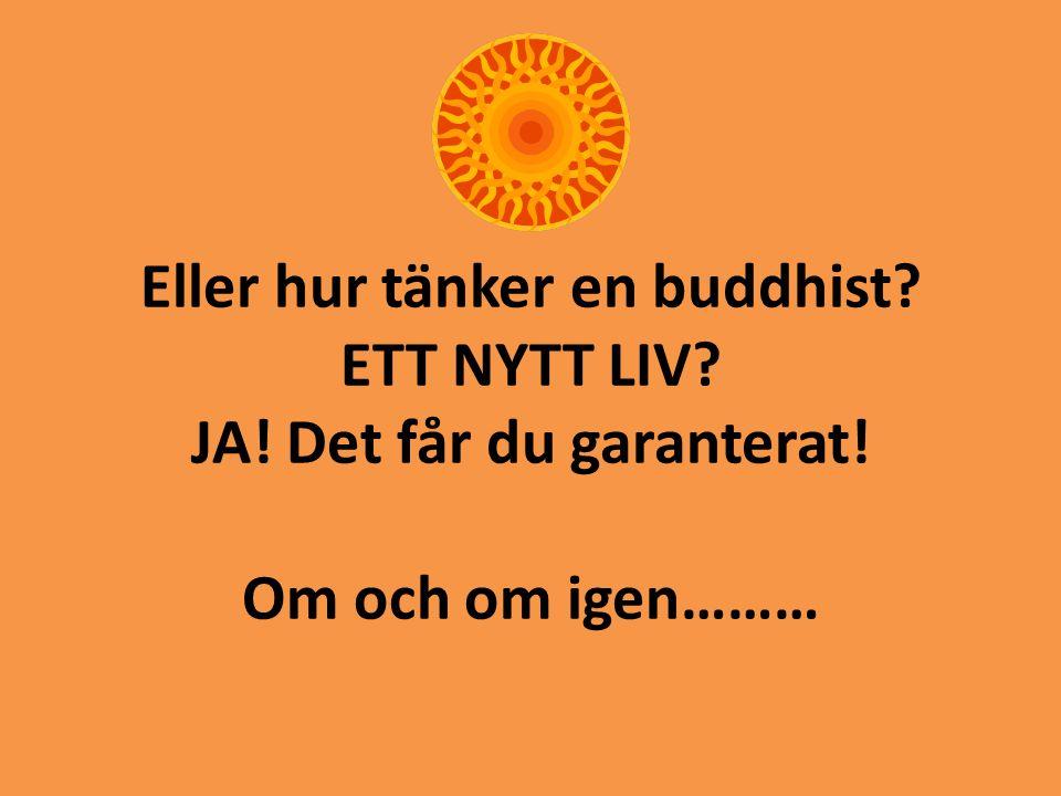Eller hur tänker en buddhist? ETT NYTT LIV? JA! Det får du garanterat! Om och om igen………
