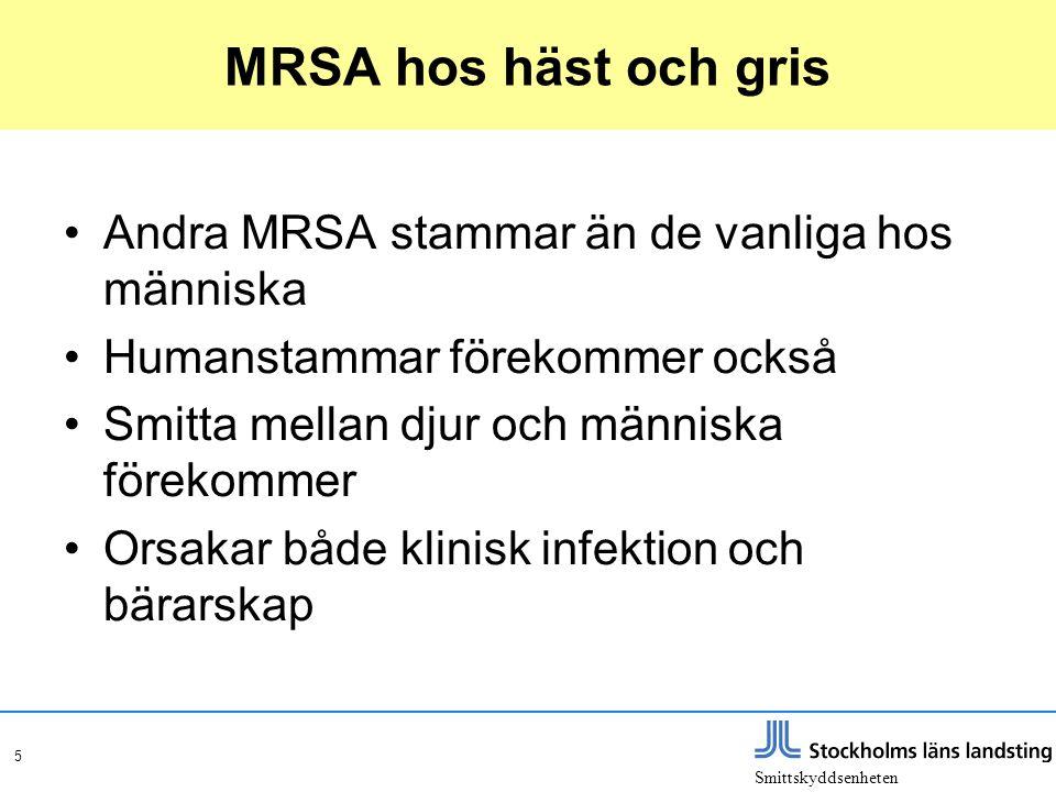 5 MRSA hos häst och gris •Andra MRSA stammar än de vanliga hos människa •Humanstammar förekommer också •Smitta mellan djur och människa förekommer •Or