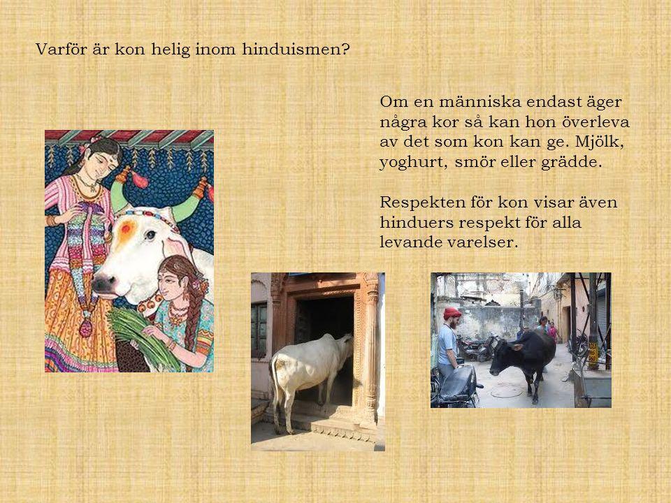 Varför är kon helig inom hinduismen? Om en människa endast äger några kor så kan hon överleva av det som kon kan ge. Mjölk, yoghurt, smör eller grädde