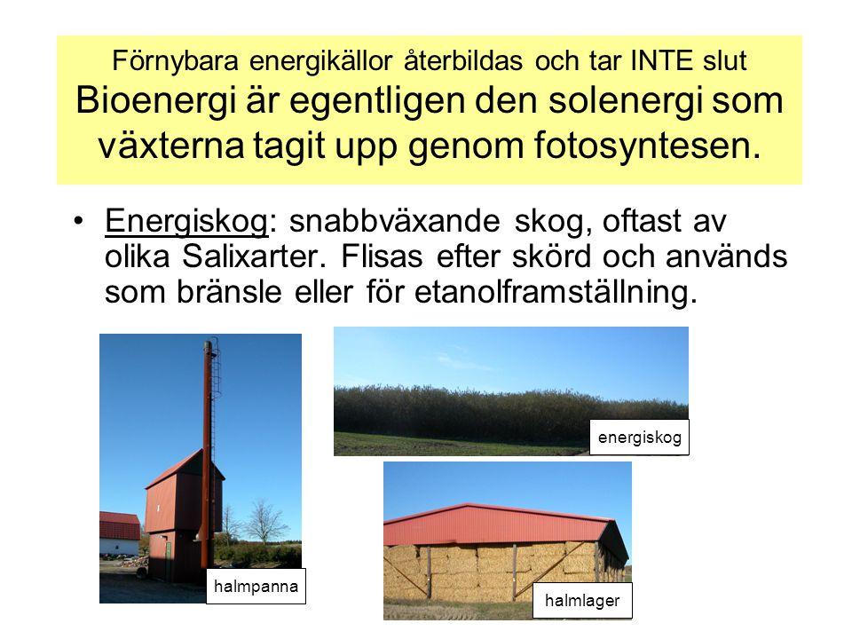 Förnybara energikällor återbildas och tar INTE slut Bioenergi är egentligen den solenergi som växterna tagit upp genom fotosyntesen. •Energiskog: snab