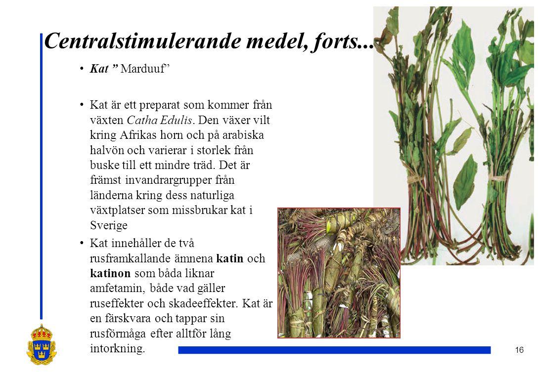 """16 Centralstimulerande medel, forts... •Kat """" Marduuf"""" •Kat är ett preparat som kommer från växten Catha Edulis. Den växer vilt kring Afrikas horn och"""