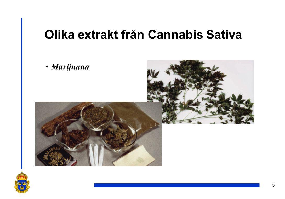 5 Olika extrakt från Cannabis Sativa •Marijuana