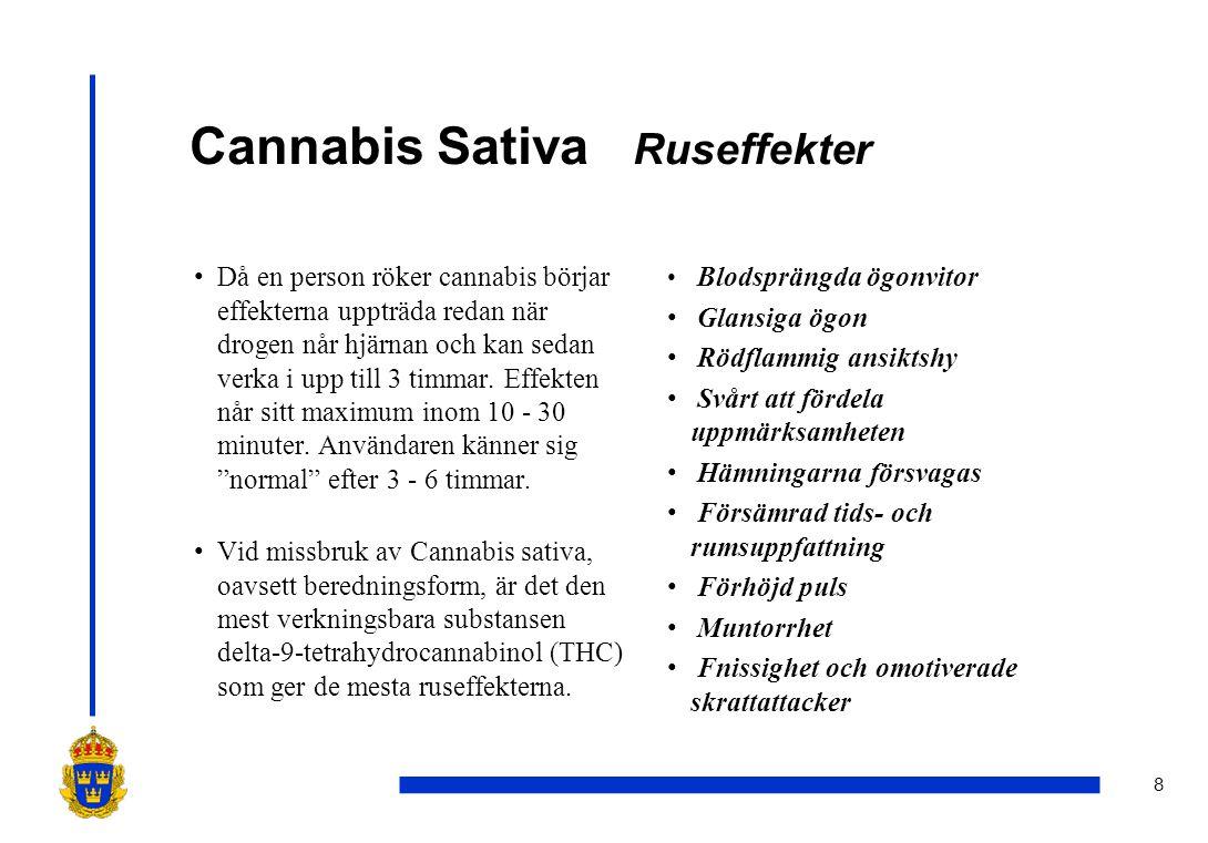 8 Cannabis Sativa Ruseffekter •Då en person röker cannabis börjar effekterna uppträda redan när drogen når hjärnan och kan sedan verka i upp till 3 ti